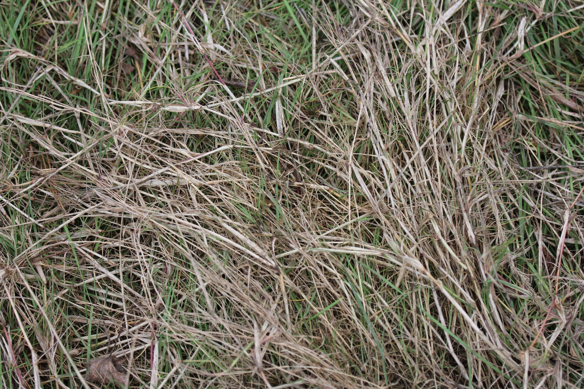 Weave a basket with this grass and collect all the equipment