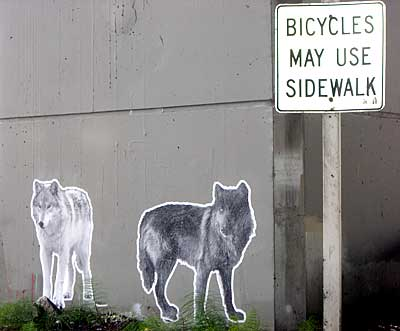 bike_path_art.jpg