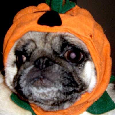 cappy_pumpkin_hugga.jpg