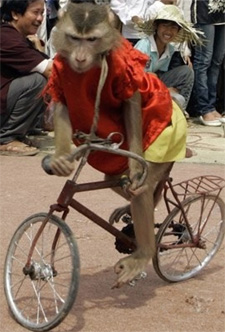 monkey_on_bike.jpg