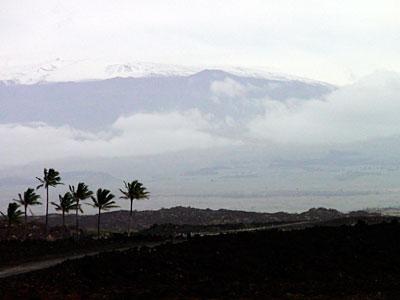 palms_snow.jpg