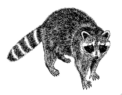 raccoon-of-doom.jpg