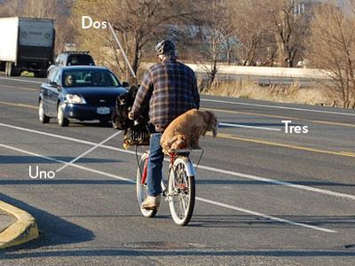 tres_dog.jpg