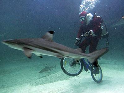 santa_bike_shark.jpg