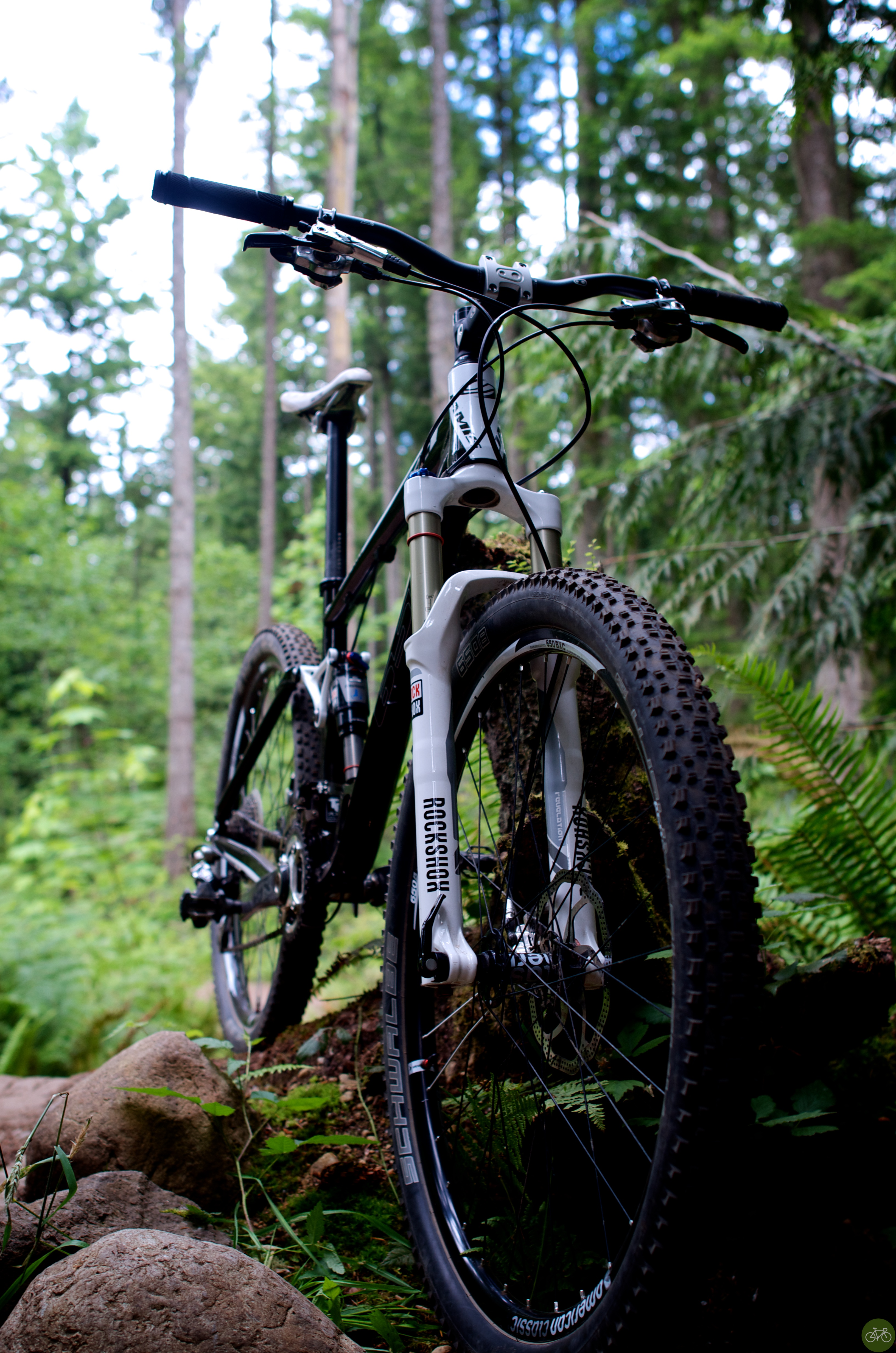 650b in the trees