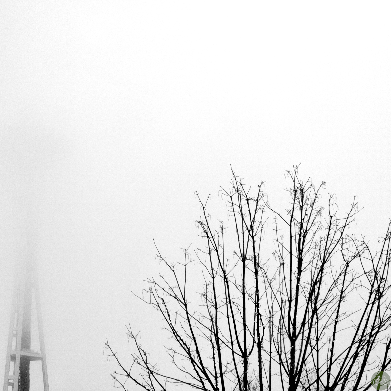 Foggy Needle