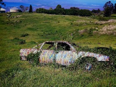 pollack, plant car