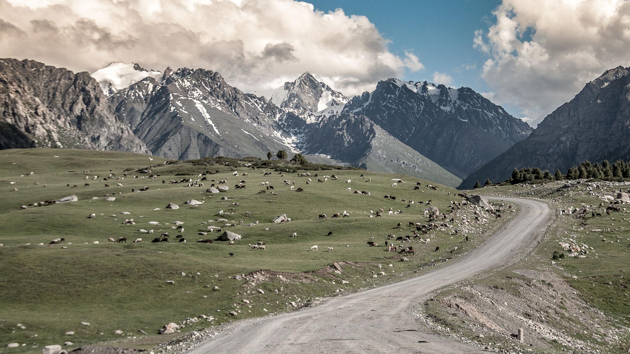 Silk Road Mountain Race Bike Hugger